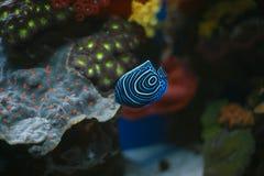 koraller fiskar det röda havet Royaltyfri Bild