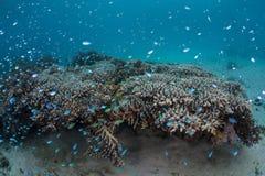 koraller fiskar reven Fotografering för Bildbyråer
