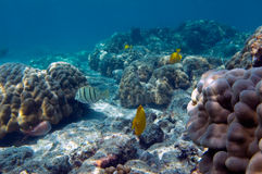 koraller fiskar tropiskt Royaltyfri Bild