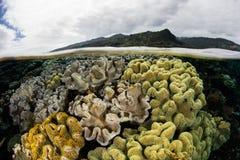 Koraller i grunt vatten Royaltyfri Bild