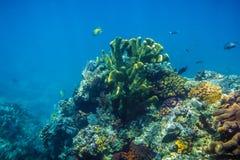 Koraller i Stilla havet Royaltyfria Foton
