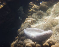 Koraller & Marine Life Arkivbild