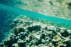 Koraller och fisk i det röda havet Arkivbilder