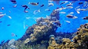 Koraller och fiskar Royaltyfria Bilder
