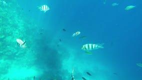 Koraller och Hög-Res för marin- liv video 1080p stock video