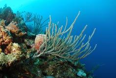 Koraller och havet snyltar arkivbilder