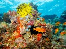 Koraller och havsliv royaltyfria bilder
