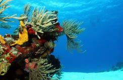 Koraller på vit sand arkivfoton