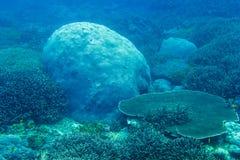 Koraller som är undervattens- i Indiska oceanen Royaltyfri Fotografi