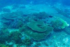 Koraller som är undervattens- i Indiska oceanen Arkivfoto