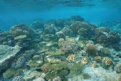 Koraller som är undervattens- på revlägenhetStilla havet royaltyfria foton