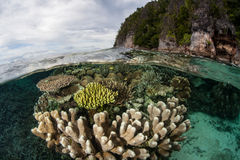 Koraller som växer den near kalkstenön i Raja Ampat arkivfoto