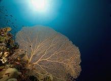 korallfisk Royaltyfri Fotografi