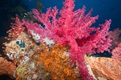 korallfisk Arkivfoton