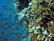 korallfiskar revar skolan Arkivbilder