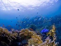 korallfiskar revar undervattens- Royaltyfria Foton