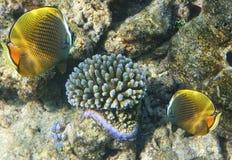 korallfiskliggande undervattens- maldives meno för lombok för giliindonesia ö nära den undervattens- världen för havssköldpadda Royaltyfria Bilder