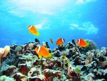 korallfiskrev Royaltyfri Foto