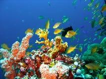 korallfiskrev Royaltyfri Bild
