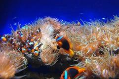 korallfiskrev Arkivbild