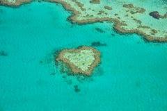 Korallhjärta Arkivfoton