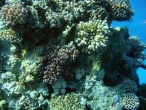 koralljpgtorn Arkivfoton