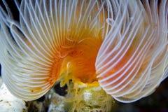 Korallklunga som ser som en lampa i Maldiverna Royaltyfri Bild
