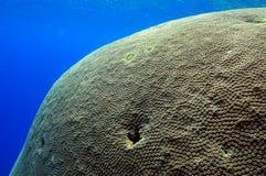 Korallkvarter royaltyfri fotografi