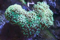 korallliving Royaltyfri Fotografi