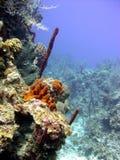 korallminirevvägg Royaltyfri Bild