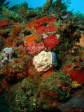 korallmound royaltyfria bilder