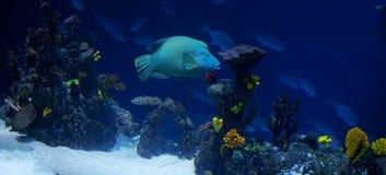 korallpanorev Royaltyfri Bild