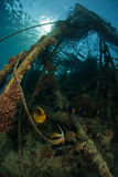 korallpelare Fotografering för Bildbyråer