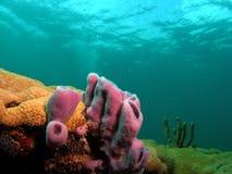 korallpurplesvamp Arkivfoton