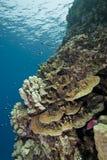 korallreefscape blir grund tropiskt Arkivbild