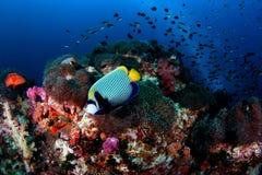 korallrev royaltyfria foton