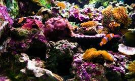 korallrev Royaltyfri Fotografi