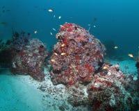 korallrev Arkivfoto