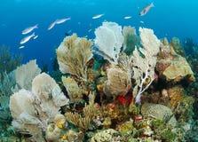 Korallrev arkivfoton