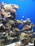 korallrev royaltyfri bild