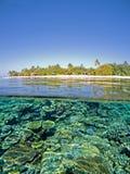 korallrev Arkivbilder