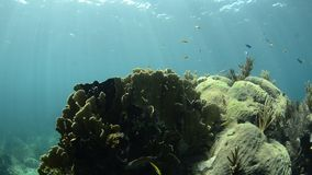 Korallrev arkivfilmer