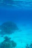 korallrev royaltyfria bilder