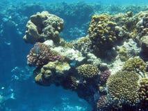 korallrev Arkivbild