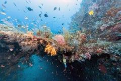 Korallrev av kust av Bali Fotografering för Bildbyråer