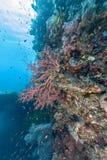 Korallrev av kust av Bali Arkivfoto