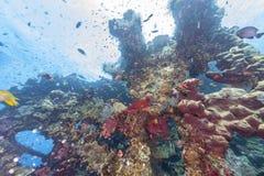 Korallrev av kust av Bali Arkivbild
