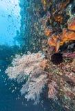 Korallrev av kust av Bali Arkivbilder