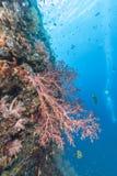 Korallrev av kust av Bali Royaltyfri Fotografi