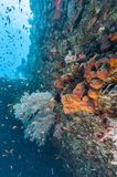 Korallrev av kust av Bali Royaltyfri Bild